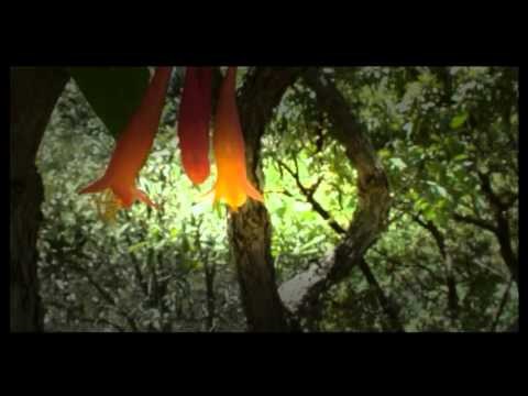 ʬ Hummingbirds : Documentary on the Secrets of Hummingbirds (Full Documentary) YouTube