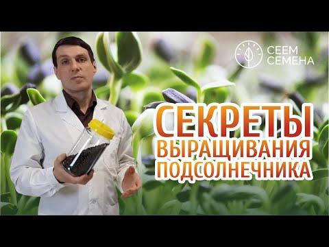 Вопрос: Как добиться равномерных всходов микрозелени?