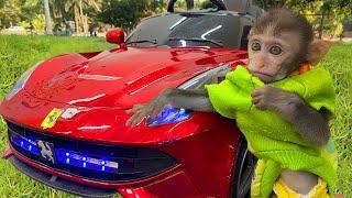 Baby monkey Bim Bim drives a car with his puppy in the garden