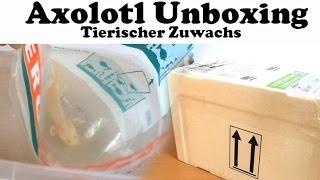 Axolotl Unboxing