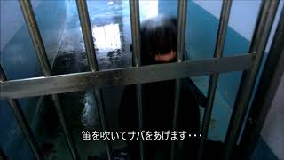 小鉄jr の偶然からの握手 伊勢シーパラダイス
