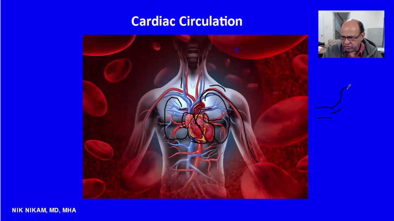 Systemic And Pulmonary Circulation By Nik Nikam Md Youtube