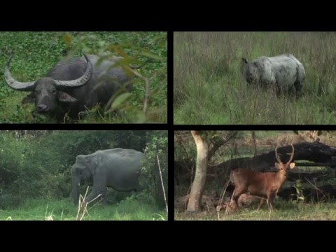 Journeys in India: Kaziranga