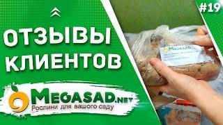 """ОТЗЫВЫ КЛИЕНТОВ - САЖЕНЦЫ """"МЕГАСАД""""   Пион 100% соответствие"""