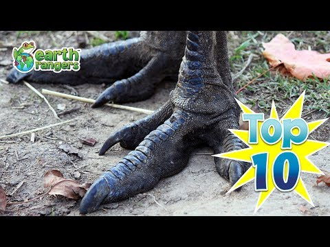 Top Ten Cool Animal Feet