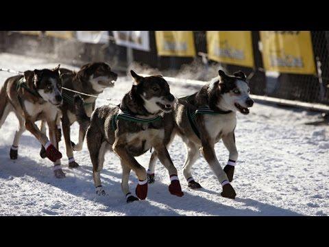 Im Bann des Yukon (1) Von Whitehorse nach Dawson - Mit Hundeschlittenführern durch Alaska [HD]