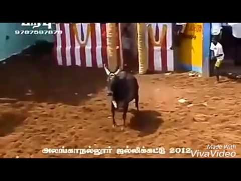 Kombu Vacha Singam Video song