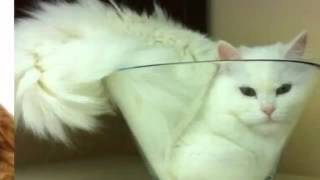 Funny and romantic pictures of cats Very beautiful cats