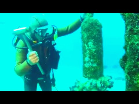 Man Dives To Underwater Shinto Shrine To Meet A Very Unexpected Friend