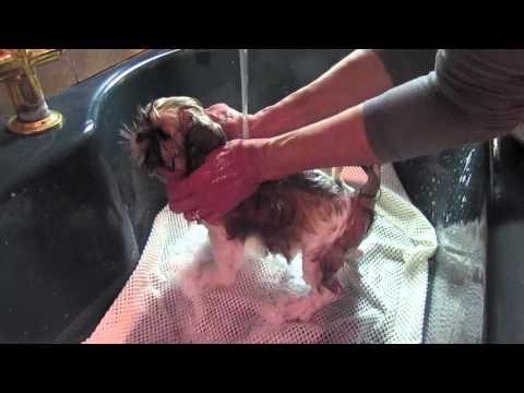 Puppy Bath: A Tutorial