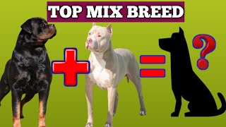 10 Rottweiler Dog Breed Mix You Don'T Know About | Rottweiler Mix With Labrador | Fish And Bird Care