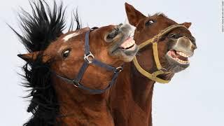 Horses Can Make Facial Expressions Just Like Humans