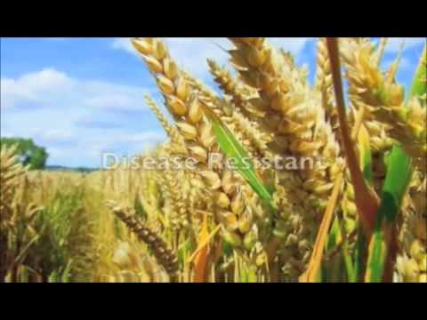 GM Foods Introduction