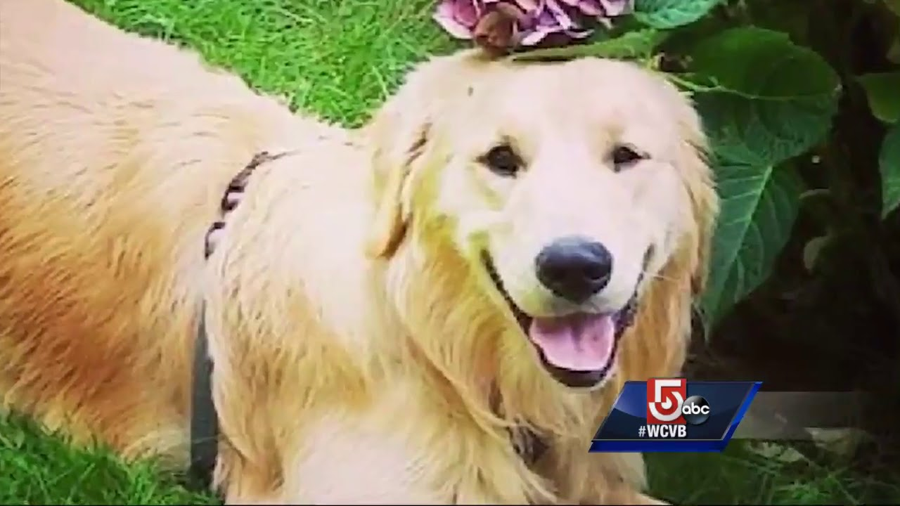Pet owners face neighbor in court over shooting of dog