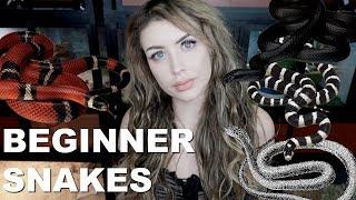 all-of-the-best-beginner-snakes-no-not-ball-pythons