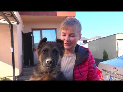 😊Весёлый щенок Немецкой овчарки. Funny Puppy German Shepherd.