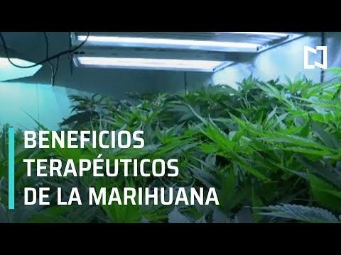 Discusión sobre los beneficios de la marihuana - Expreso de la Mañana