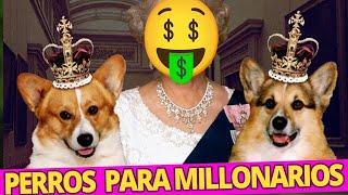 LOS PERROS MAS CAROS DEL MUNDO en el 2021 ¿Podrías comprar alguno de estos perros?