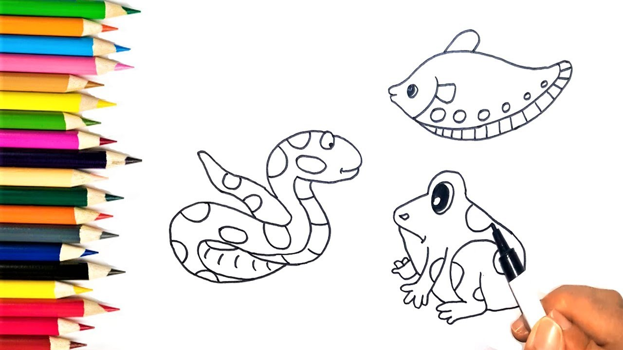 How to Draw Snake, Fish and Frog | Coloring Pages Animals ...