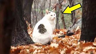 Кот с большим животом 3 месяца сидел в лесу и не хотел уходить. Люди решили выяснить почему