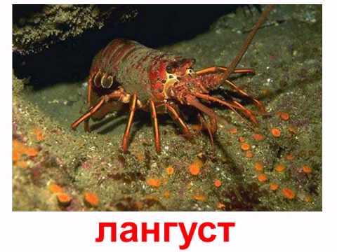 Беспозвоночные.avi