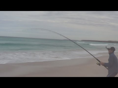 Catching Big Australian Salmon Off The Beach