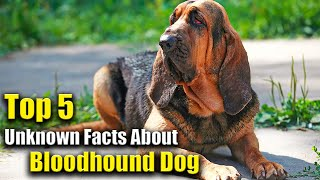 TOP 5 BLOODHOUND DOG Facts You Don't Know About | Pawsome Facts