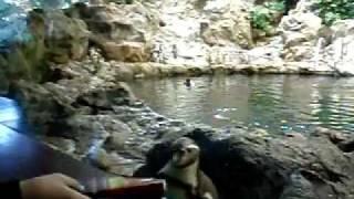 Пингвин гоняется за газетой,улыбнуло:) Loro Parque(, 2012-01-07T22:26:49.000Z)