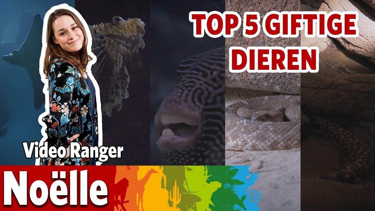 De 5 giftigste dieren in Burgers' Zoo!