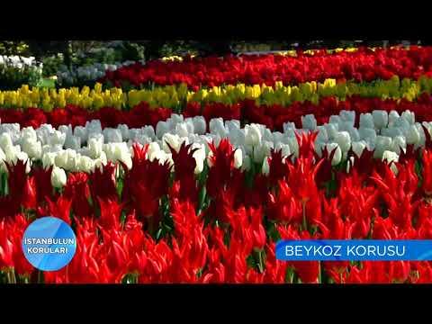 İstanbul'un Koruları | Beykoz Korusu