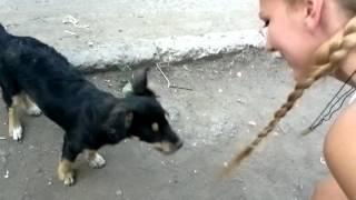 собака резинку сьела)))