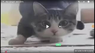Кошка танцует вего вего (смотреть всем!)