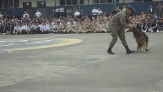 Demostración canina de las Fuerzas Armadas Fae N.3 Taura