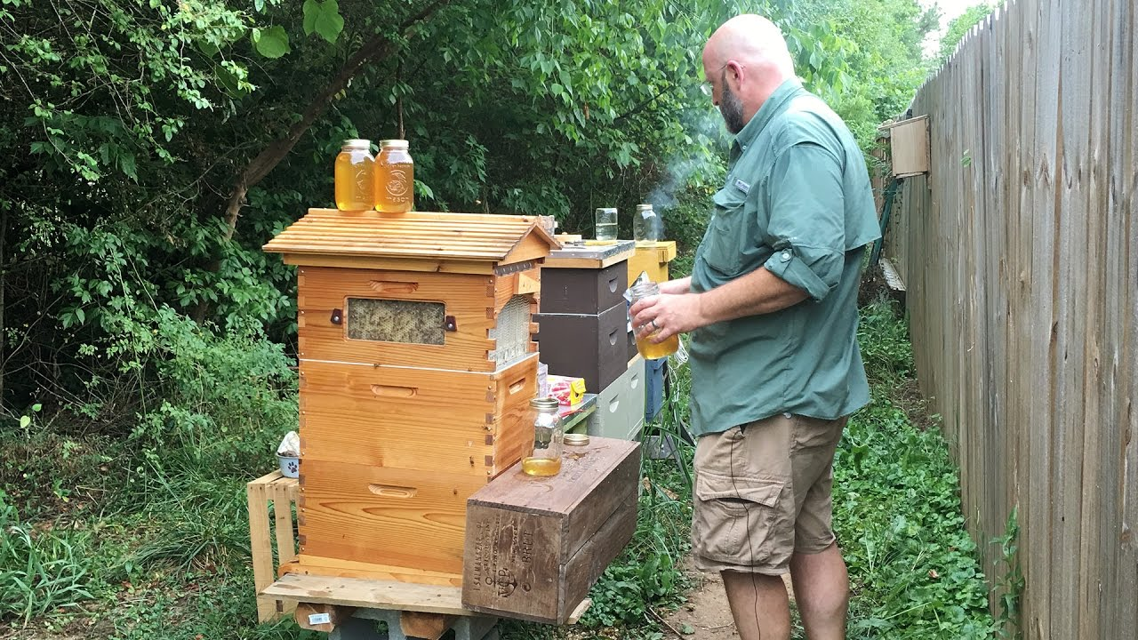 a beekeeper and collecting honey