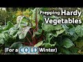 How to Prepare Hardy Vegetables to THRIVE during a COLD Winter