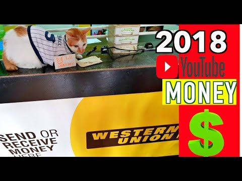 Cat's FIRST YouTube PAYCHECK! | How Much Did I Make?💰😺
