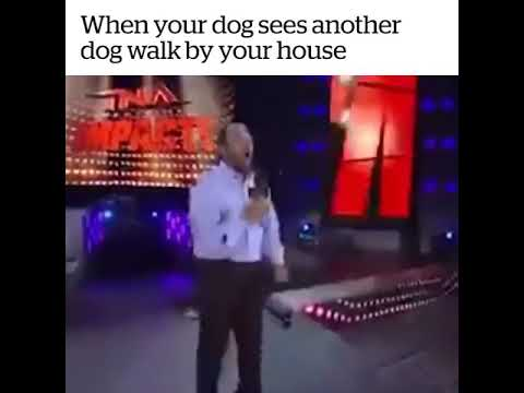 When your dog sees another dog walk by your house