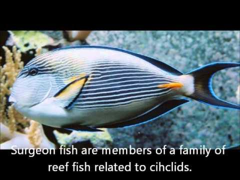 Top 8 Poisonous Fish