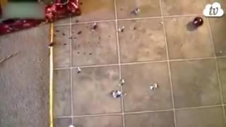 Вот какие коты бывают под Новый Год!