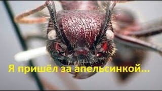Ужас! Шок! Атака муравьёв!