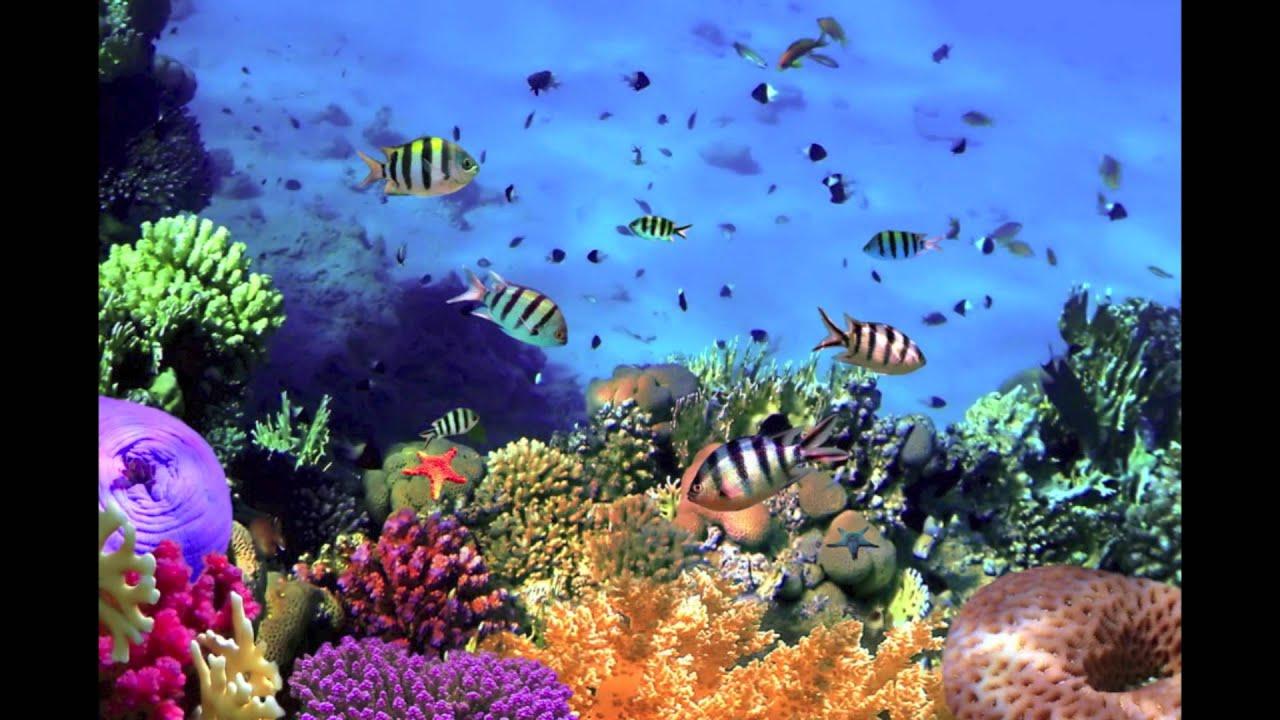 carnival of the animals aquarium aquarium prima. Black Bedroom Furniture Sets. Home Design Ideas