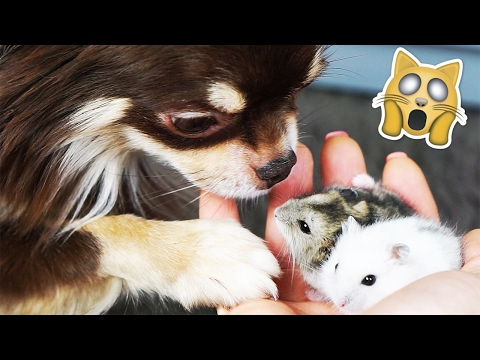 как познакомиться с мишей дроздовым