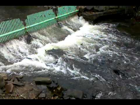 New york state salmon river fish hatchery youtube for Salmon river ny fishing