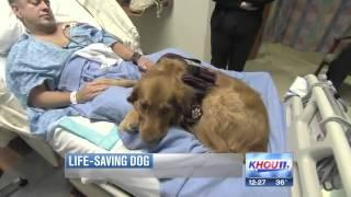 Man's Best Friend: Dog Helps Save California Man's Life