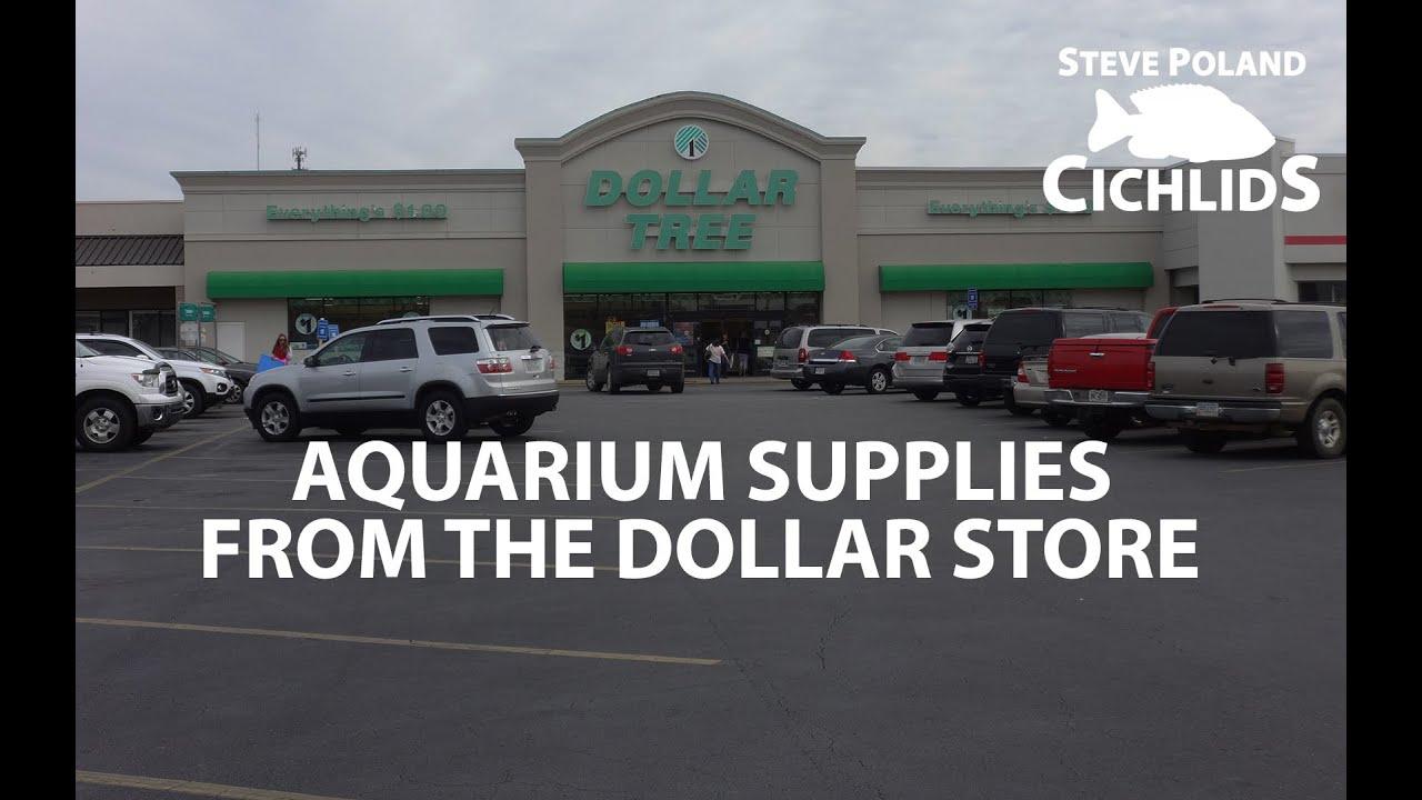 Fish in aquarium stores - Aquarium Supplies From The Dollar Store