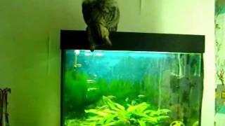Кошка на аквариуме