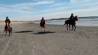 Canter in the beach