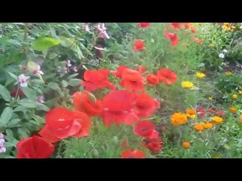 садовые цветы для сада фото