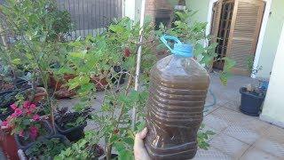 Adubo Natural que faz sua Planta Florir em 15 Dias