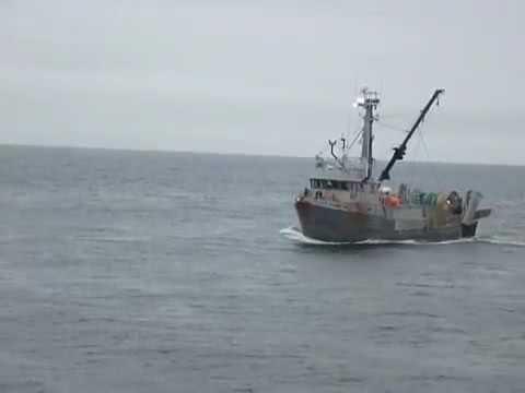Fisheries Observer Joint-Venture Hake